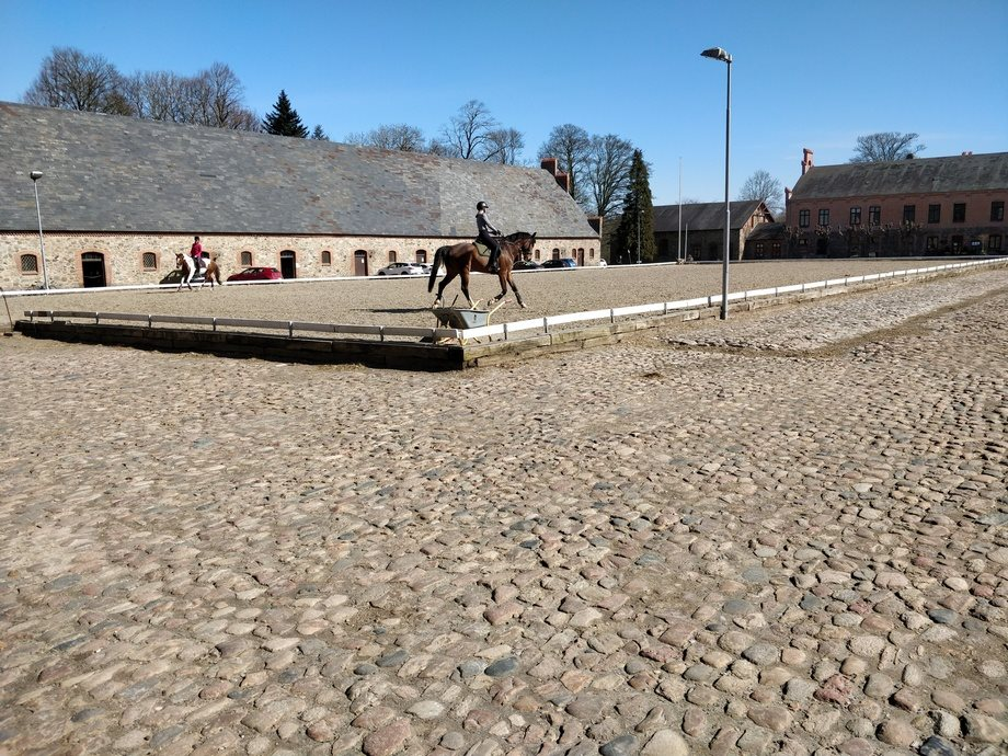 Aarhus Rideklub laver online undervisning