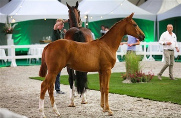 Catch Me If You Can's halvbror solgt for 68.000 EUR
