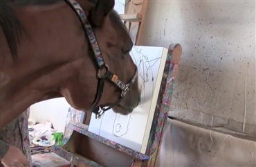 En hest med sans for kunst (Video)