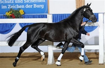 150.000 euro for dyreste hingst