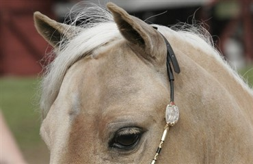 Top Horse of the Year 2011