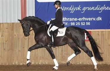 Hingsteshow Nord for 22. gang i 2012