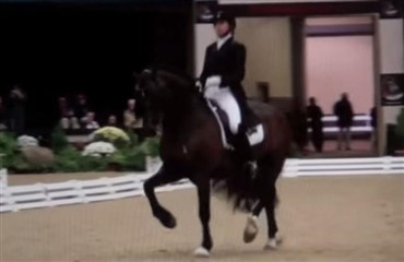 Welsh cob vinder GP Kür - VIDEO